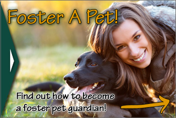 Foster Pet Guardians