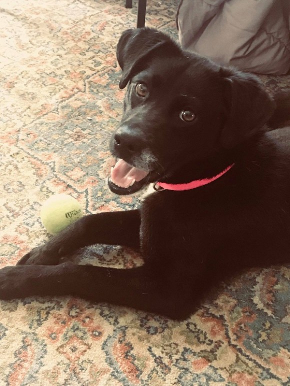 ***ADOPTED!!***      JUSTICE – American Mut – Female – 1Y