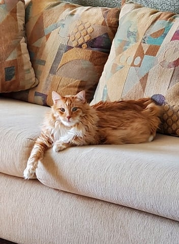 SATCHI – DLH Orange & White – Male – 9 Y